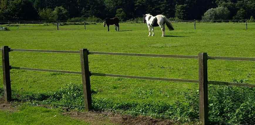 Fieldguard electric fencing