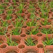 M5 -Grass