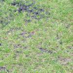 M5 -grass1