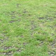 M5 -grass2