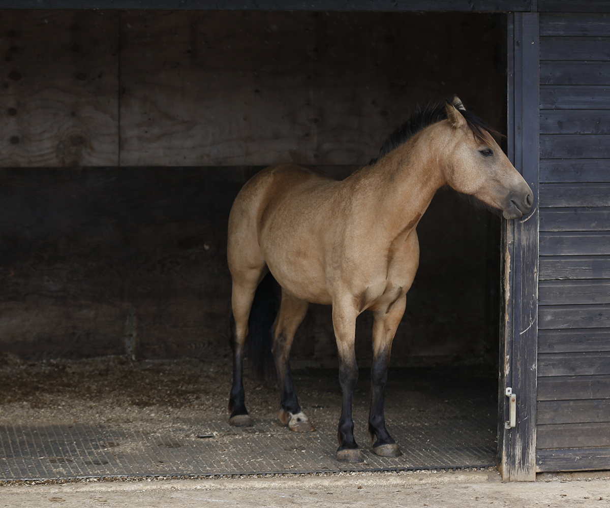 Horse bedding mats, Blue Cross, Burford Rehoming Centre