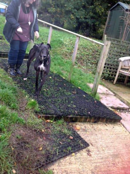 Celia Cross Greyhound Rescue