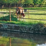 Denmark - Horseguard