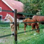 Finland - Horseguard