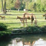 NETHERLANDS Horsefriend