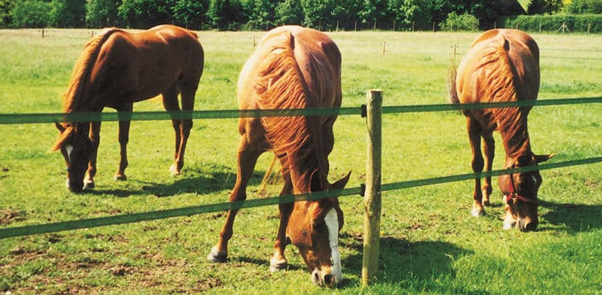 Fieldguard electric horse fencing - the perfect horse fencing solution