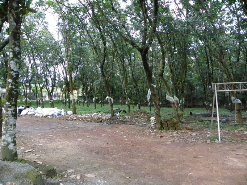 Kerala Rubber Plantation